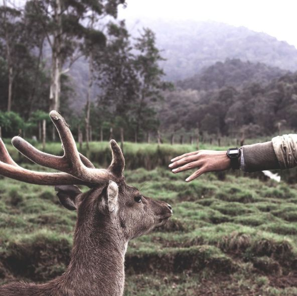 Here in Ranca Upas, Bandung, you can feed the deer or simply watch them graze peacefully.