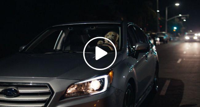 Cães Testam e Aprovam o Novo Modelo Subaru