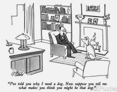 Job Interview For A Working Dog Dogs Pinterest