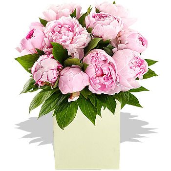 Perfect Peonies - flowers Simply perfect pink Peonies in an Aqua Pack Gift Bag ready to display. http://www.comparestoreprices.co.uk/flowers-and-flower-delivery/perfect-peonies--flowers.asp