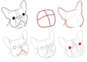 127 best drawing images on Pinterest  Drawings English bulldogs