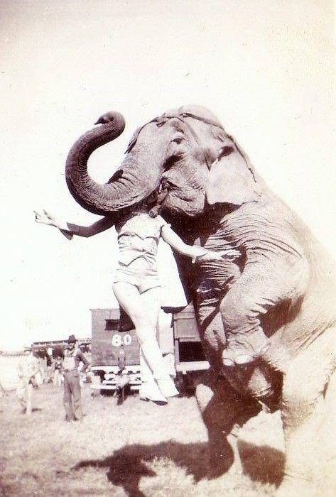 source : apreslapub.fr _  collection image photo cliché archive vintage, scène de cirque, humour insolite, femme et éléphant /circus scene