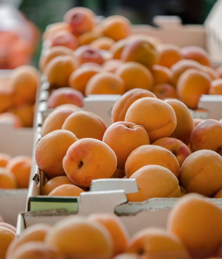 Kettleman Apricots at Frog Hollow Farm - Santa Monica Farmers Market