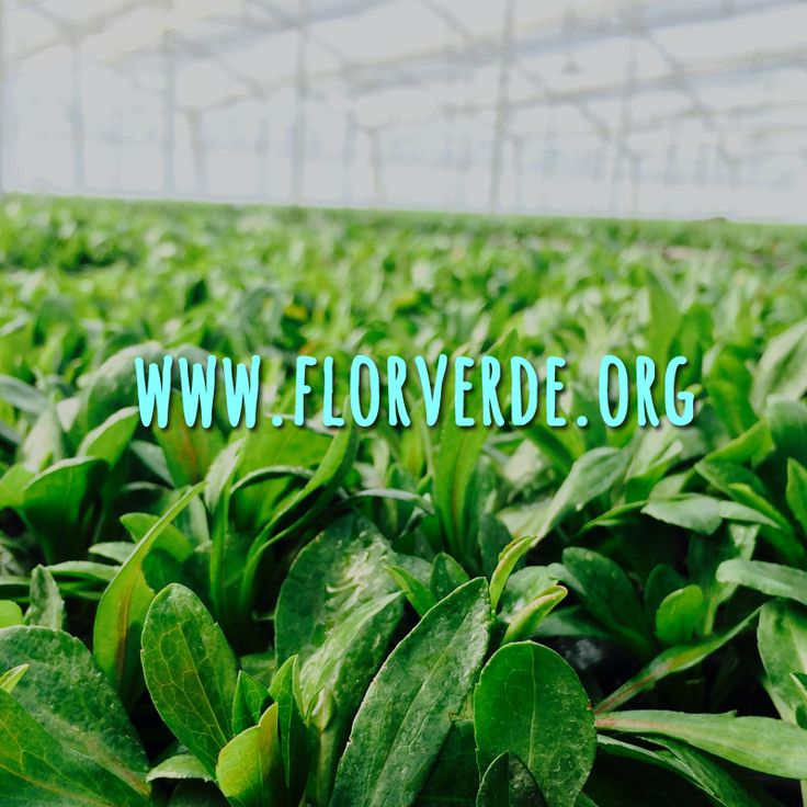 From 1 to 5 (when 1 is the worst and 5 the best) tell us how do you find our website? www.florverde.org #Help