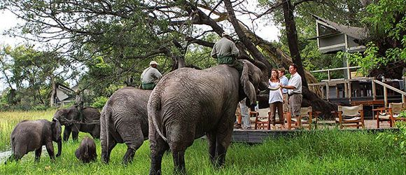 Meet the resident elephant herd  at Abu Camp in the Okavango