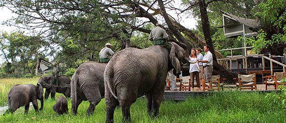 Meet the resident elephant herd  at Abu Camp in the Okavango