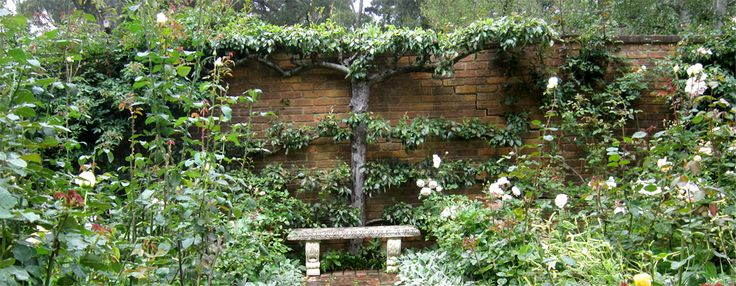 Merrywood Plants Espalier
