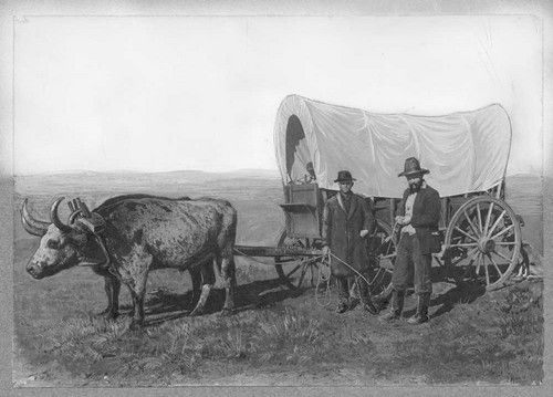 Cow Pulling Wagon : Conastoga wagons covered wagon pulled by an ox kansas