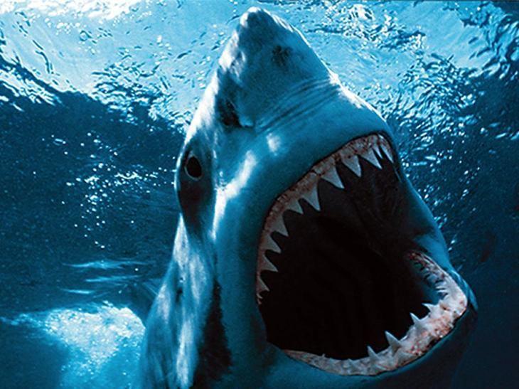 Большая белая акула . 10 самых больших рыб в мире. Фото с сайта NewPix.ru