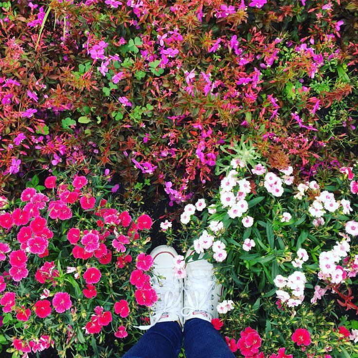 Converse, flores, florecer  #white #converse #colors #flowers