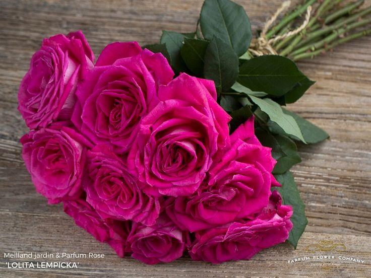 120 best images on pinterest beautiful roses - Arbustos para jardin ...