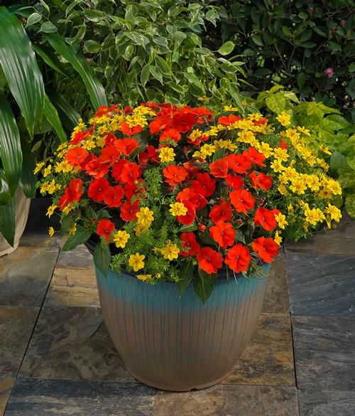 electric orange is perfect in mixed containers
