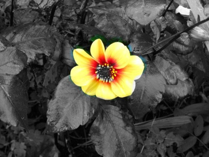 1000 Images About Black And White With A Splash Of Color On Pinterest Splash Of Color