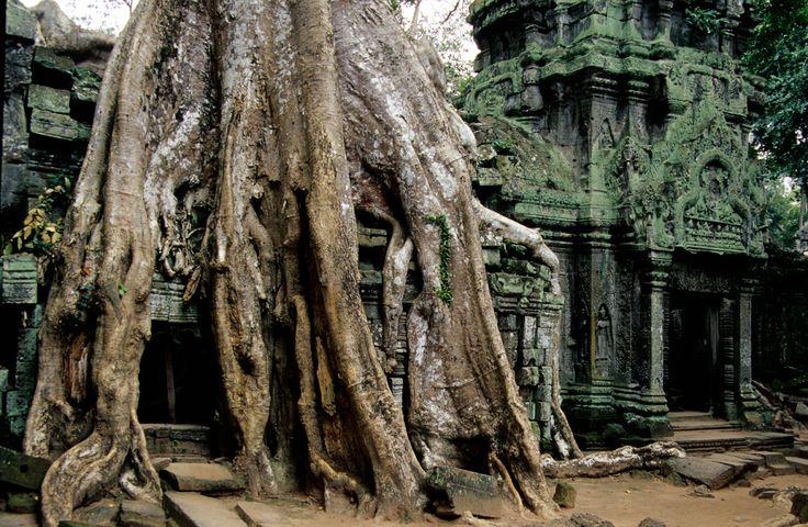 Angkor: Tempio Ta Prohm
