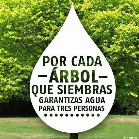#TipsEco #Árbol #Agua