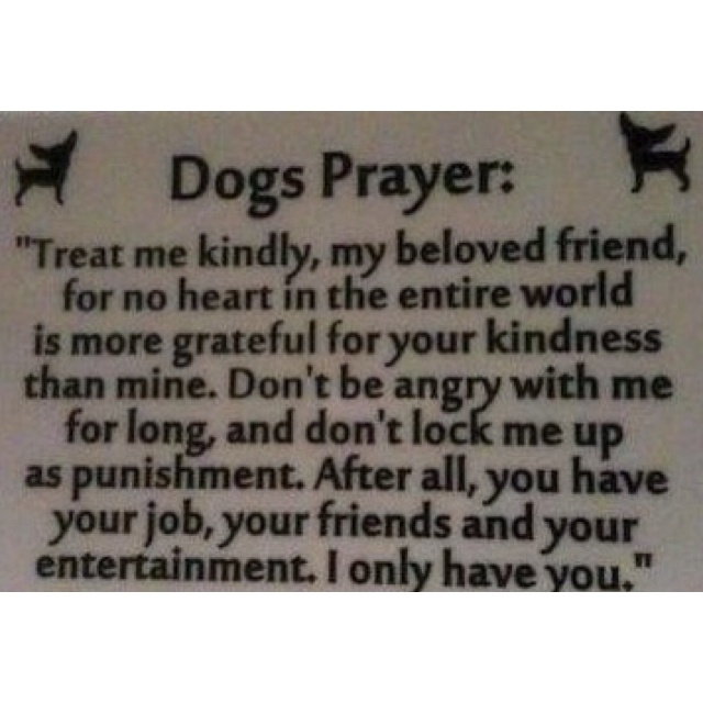 Dog prayerPuppies, Stuff, Quotes, Pets, Dogs Lovers, Things, Furries Friends, Dogs Prayer, Animal