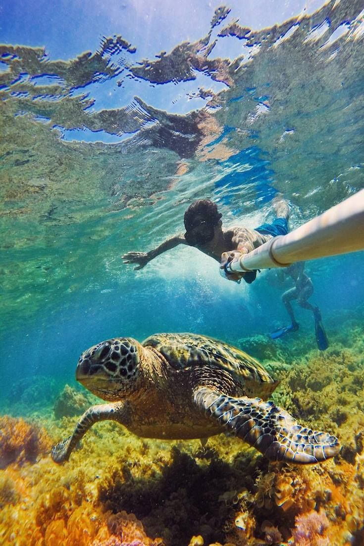 """Apo Island, Philippines leonardomedici """"Turtle diving. Remember to keep your distance and don't touch the underwater world"""""""