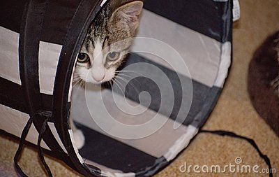 Curious cute cat in tunnel. Cat relax in the tunnel.