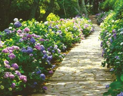 stone pathway pictures | Stone Pathway Design Ideas