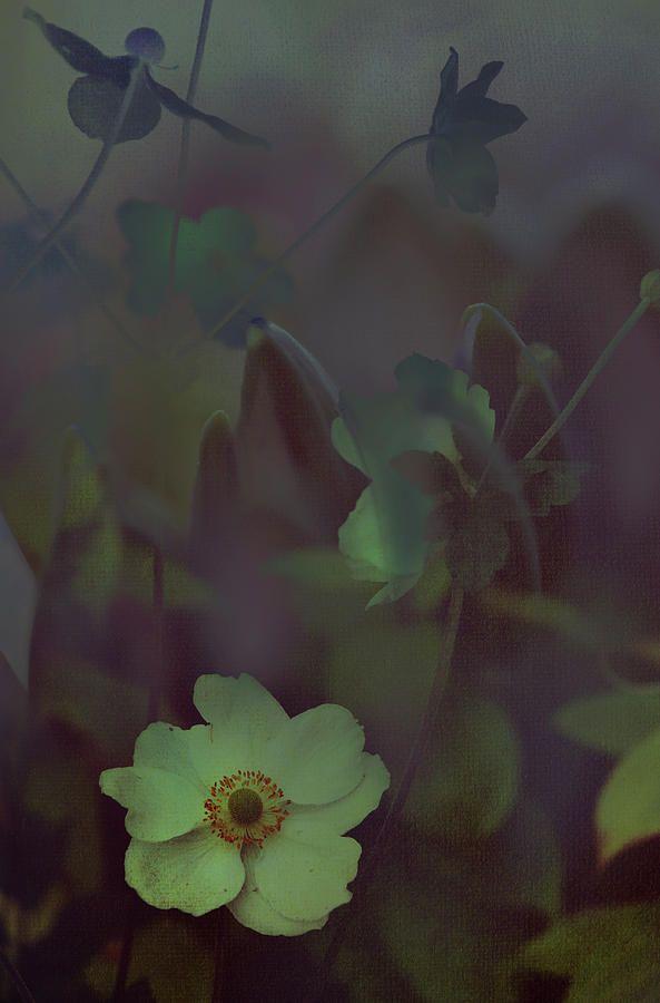 Moon Sonata by Jenny Rainbow