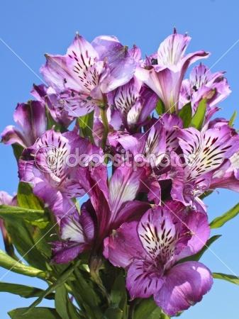 Purple Alstromeria Bouquet the flower I want in my tattoo