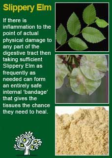 Richard Whelan ~ Medical Herbalist ~ Slippery Elm  Slippery elm bark is a very valuable remedial agent in mucous inflammations of the lungs, bowels, stomach, bladder, or kidneys. It is also highly beneficial in diarrhoea, dysentery, coughs, pleurisy, strangury, and sore throat, in all of which it tends powerfully to allay the inflammation.