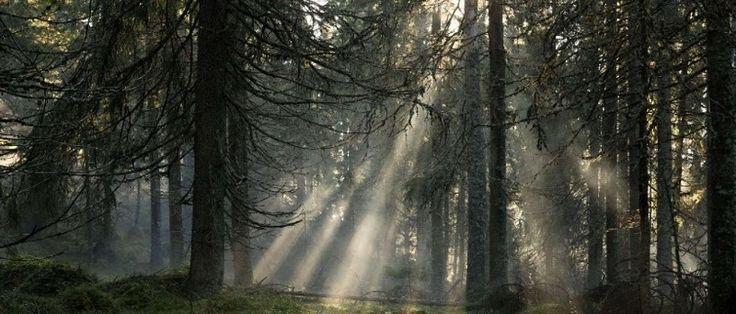 Do extremo sul de Smygehuk ao deserto em torno do Three-Country Cairn, no norte, todo o território da Suécia estará disponível no Airbnb a partir de 22 de maio de 2017. O Visit Sweden, bureau de incentivo de turismo do destino, e a maior comunidade de compartilhamento de lares do mundo fizeram...
