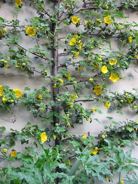 295 Best GARDEN: Espalier Images On Pinterest   Garden Ideas, Gardening And  Espalier Fruit Trees