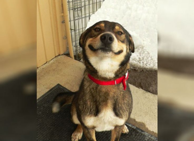Funny Meme Smiley : 18 best smiling pups images on pinterest smile smiling dogs and