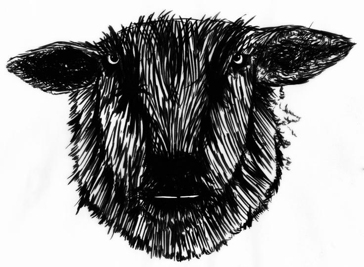 Sheep by Michaela Huml