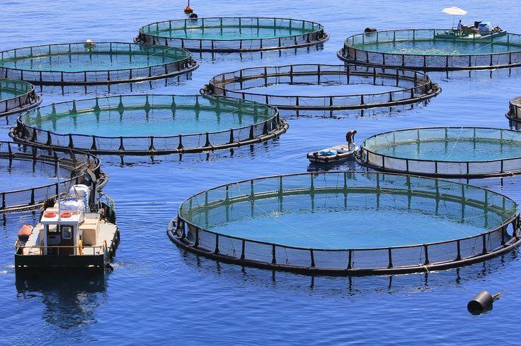 Fish farms in Aitoloakarnania, Greece