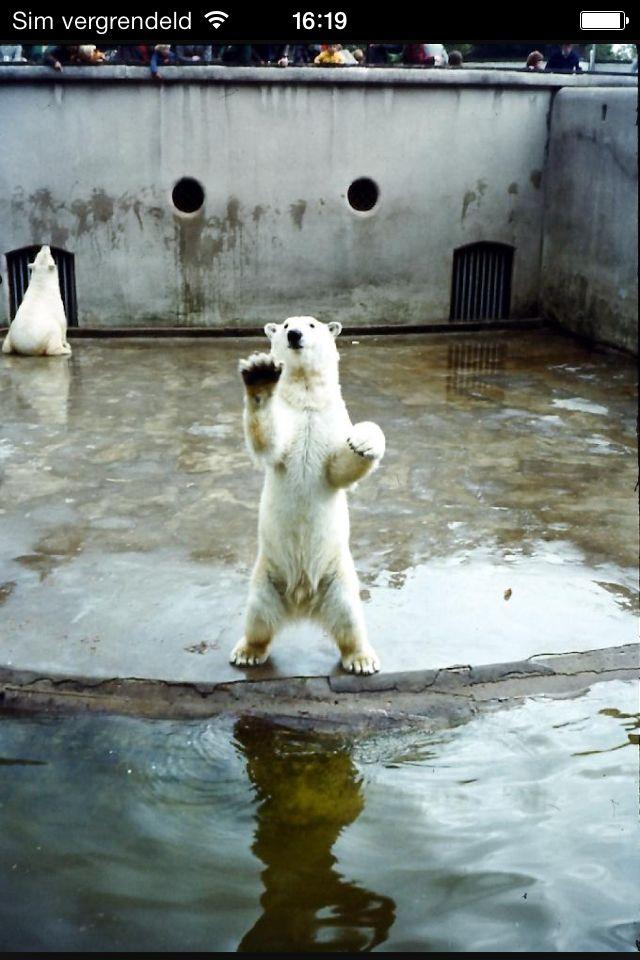 Oude ijsberen verblijf van Blijdorp