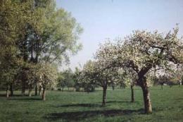Volg met je kinderen de speurtocht over fruit in Boomgaard De Boswachter, te vinden op Landgoed Haarzuilens vlakbij de stad Utrecht. Onder de fruitbomen kan je