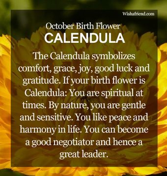 October Birth Flower : Calendula