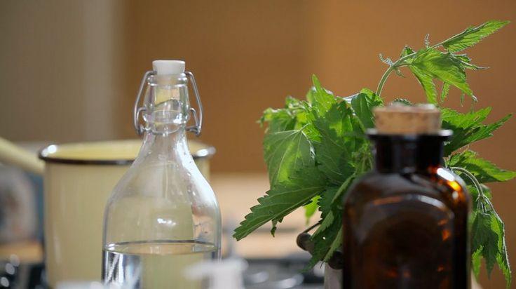 Kopřivový šampon — Recepty — Herbář — Česká televize