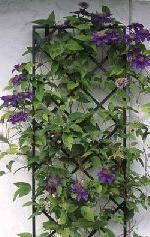 Trellis metal | Wrought iron garden decorations: