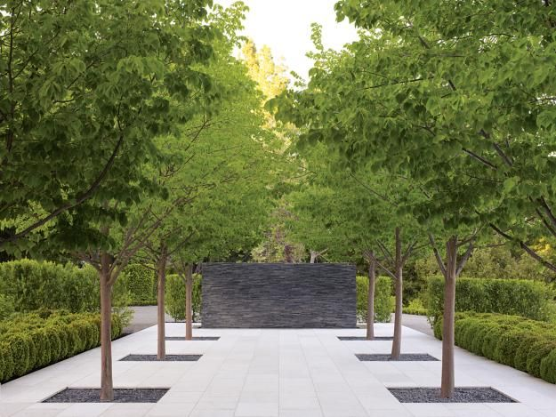 Modern allee of linden trees  A. Cochran