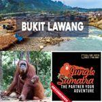 Bukit Lawang Jungle Trekking | Sumatra | www.junglesumatra.com