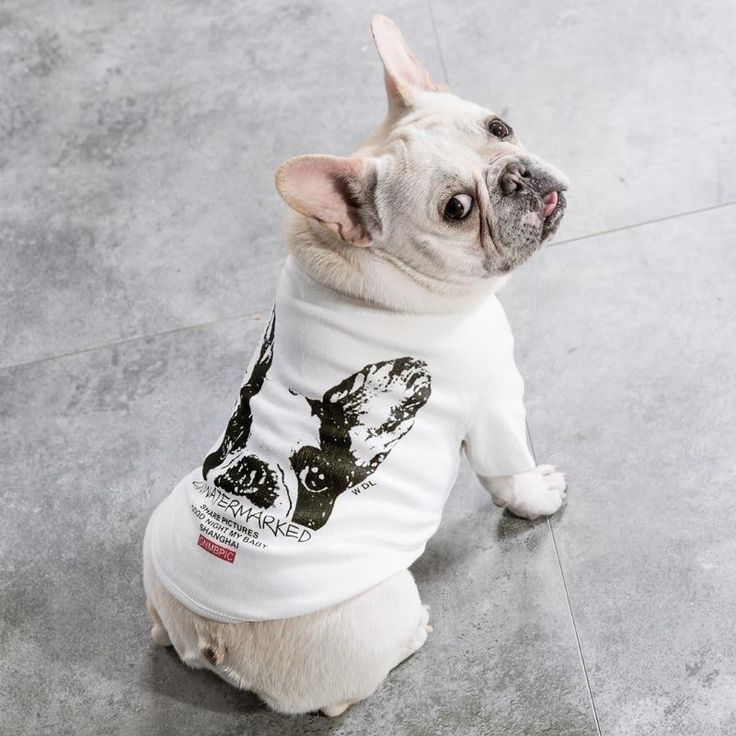 Unwatermark Tshirt For French Bulldogs And Pugs Available On Www Frenchienpug Com Frenchbulldogclothe French Bulldog Clothes Dog Coats Dog Clothes