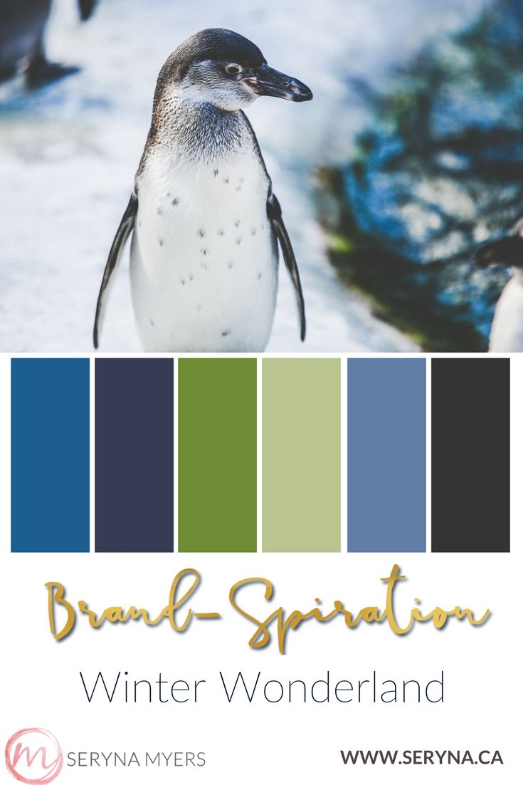 Penguin in winter with a cool palette of blue and green.