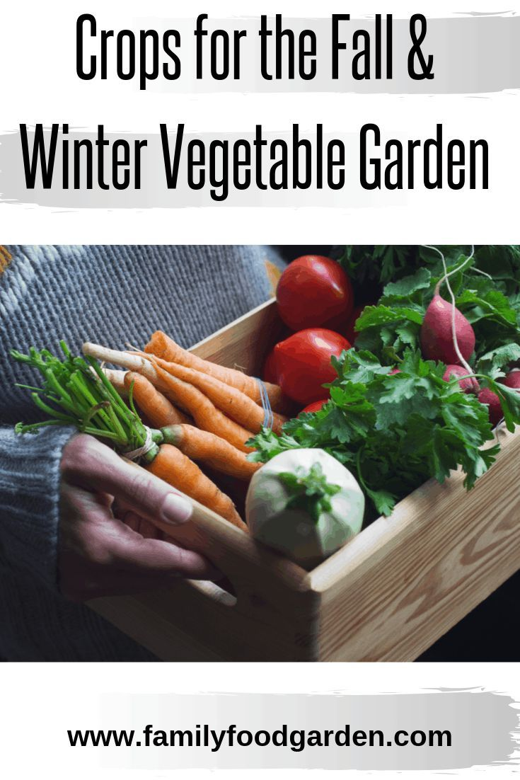 Cold Hardy Crops for the Fall & Winter Vegetable Garden  – Raised Bed Gardening