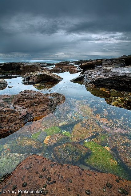 Low Tide :: Avalon Beach    Rock shelf south of Avalon Beach at low tide  Northern Beaches, Sydney, Australia