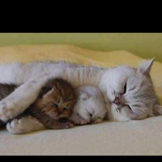 sweet dreams ~ lovin my babies