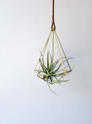Handcrafted In Seattle This Br Teardrop Air Plant Hanger Is Modern Art Suspended By A Leather Cord Tillandsia Included Your Purchase