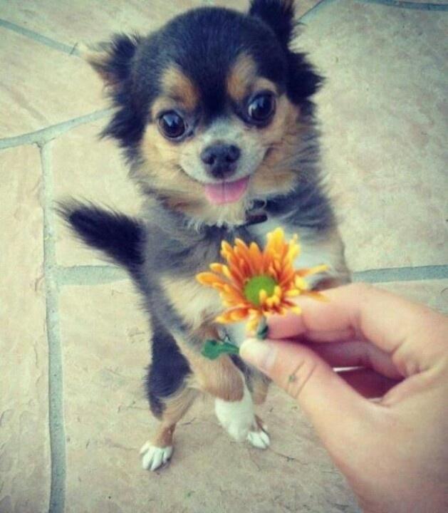 Small dogs are sooooo cute