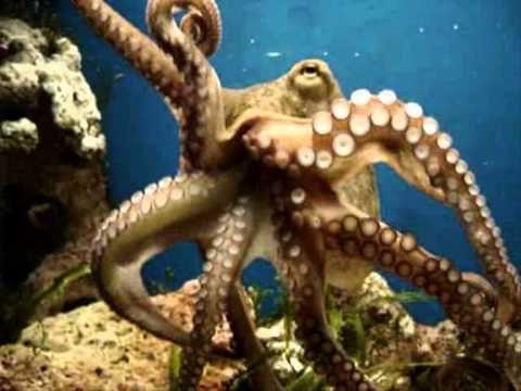 Баев Евг.Подводные цветы (1 часть).