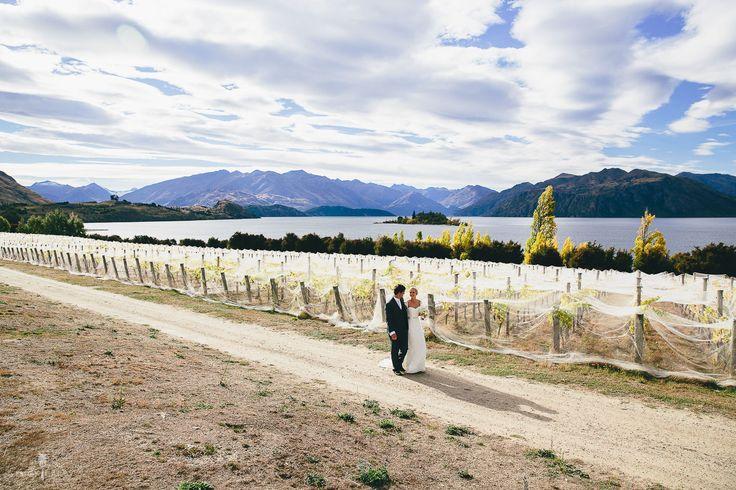 Last of the evening sun on their vineyard wedding day at Rippon, Lake Wanaka