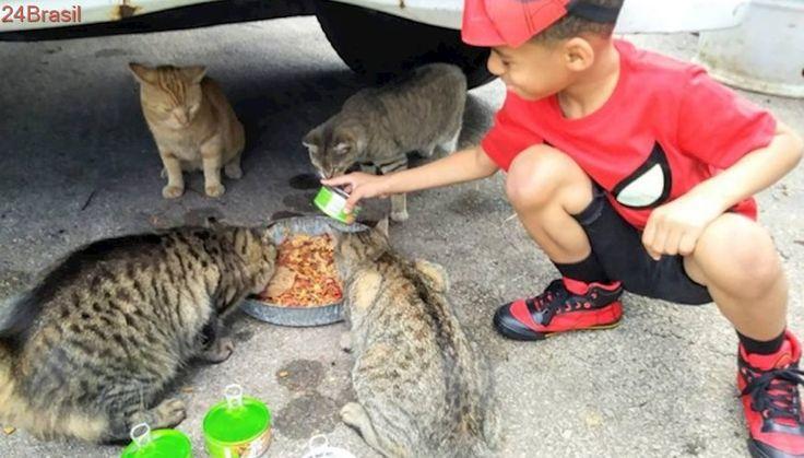 Menino de cinco anos se fantasia de super-herói para salvar gatos abandonados