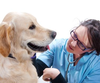 Help with pet veterinary costs