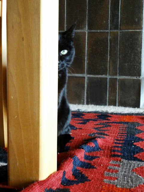 ohfortheloveofblog: cats